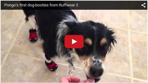 pongo dog booties